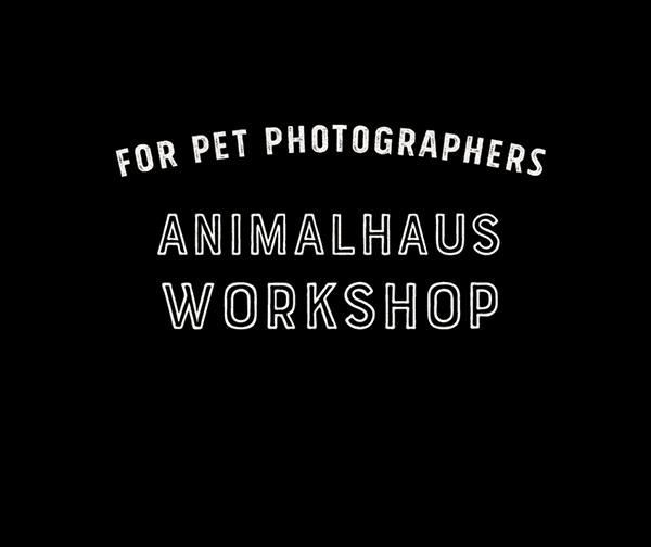 banner_animalhaus_workshop_600